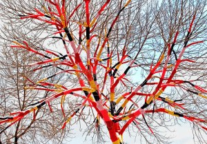 Yarn Bombed Tree